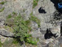 Klettersteig Obergurgl : Obergurgler zirmwald klettersteig