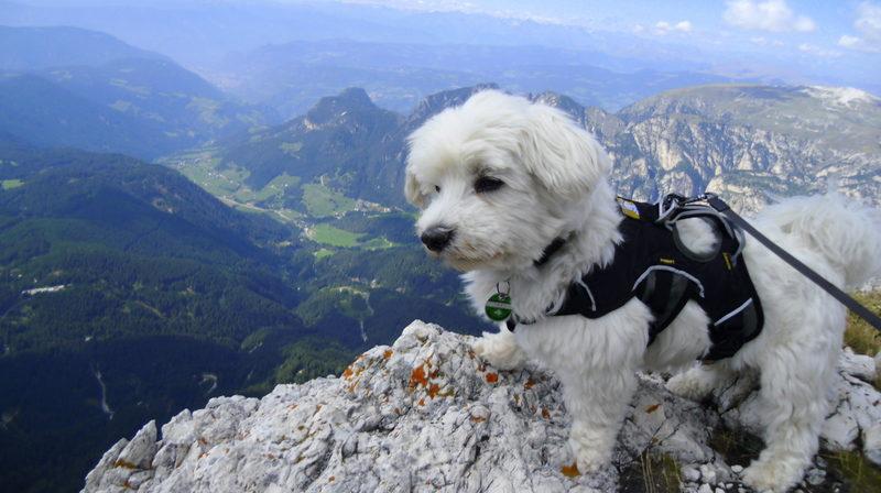 Klettergurt Hund : Bergtouren und leichte klettersteige mit hund