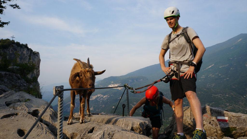 tierische Begegnung im Klettersteig - Bild: Espen Hermans