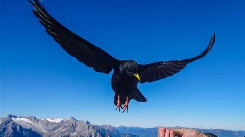 Faszination Berge – Bergerlebnis Karwendel im Fernsehen